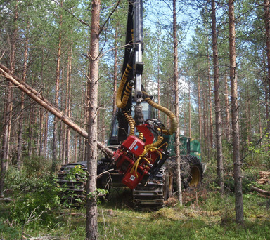 EF28 söötev energiapuu langetuspea